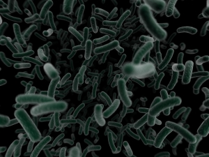 bacteria_1