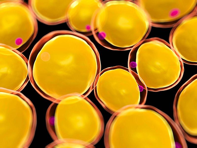 Komórki macierzyste z tkanki tłuszczowej